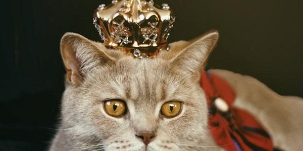Tipy k oslavě narozenin a dvoje narozeniny královny Alžběty II